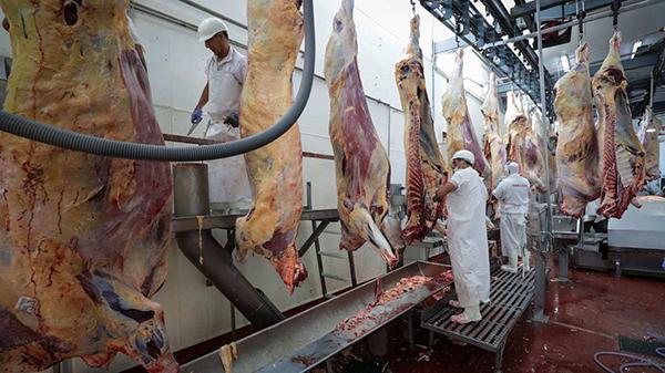 El riesgo de contagio se multiplica por 20 en los mataderos. Foto: EFE.